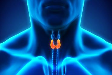 Thyroid image